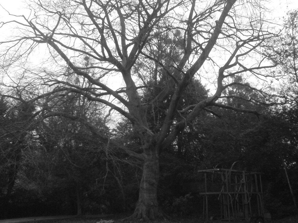 hanging tree sapperton